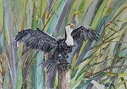 Anhinga Paintings - Let the Sun Shine by Phong Trinh