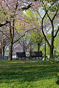 Park Benches Framed Prints - Lets Have A Seat Framed Print by Carolyn Stagger Cokley