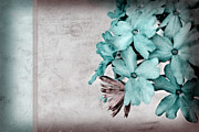 Blue Flowers Photos - Letter From Home by Bonnie Bruno