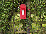 Mail Box Photo Metal Prints - Letterbox in a Hedge Metal Print by Louise Heusinkveld