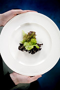 Low-calorie Prints - Lettuce Print by Arno Massee