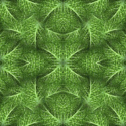 Large Scale Digital Art Prints - Lettuce Live Green  Print by Sue Duda