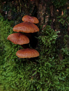 Fungus Photos - Levitation by Odd Jeppesen