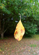 Falling Leaf Card Framed Prints - Levitation Framed Print by Renee Trenholm