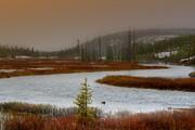 Lewis River - Yellowstone National Park Print by Ellen Heaverlo