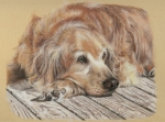 Golden Retriever Art Pastels Prints - Lexie Print by Terry Kirkland Cook