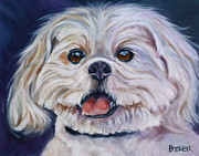 White Dog Drawings Framed Prints - Lhasa Apso Framed Print by Susan A Becker