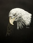 Bald Eagle Pastels Metal Prints - Lia Metal Print by Pat Morris