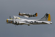 Bomber Escort Posters - Liberty Belle and P51 Mustang Poster by Ken Brannen