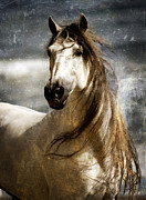 Equine Art Art - Liberty by Patty Hallman