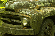 Lichen-covered Fence Prints - Lichen Covered Truck 11 Print by Douglas Barnett