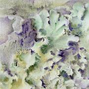 Botanical Drawings - Lichen by Mindy Lighthipe