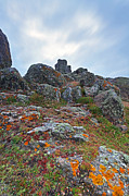 Lichen Photo Prints - Lichen on the rocks at Lands End Print by Richard Thomas
