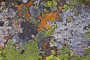 Forms Prints - Lichen Pattern Series - 15 Print by Heiko Koehrer-Wagner