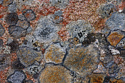 Forms Prints - Lichen Pattern Series - 6 Print by Heiko Koehrer-Wagner
