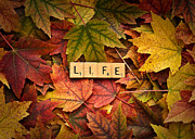 Forgive Prints - LIFE-Autumn Print by  Onyonet  Photo Studios