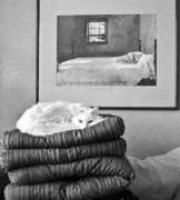 Canvas  Black And White Cat Photos - Life Imitates Art by Julie Niemela