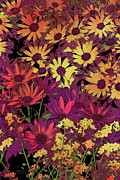 Photography Painting Prints - Life in Flowers Print by JQ Licensing