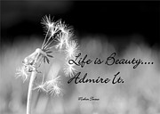 Black And White Mother Teresa Prints - Life is Beauty Print by Laurinda Bowling