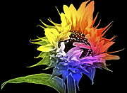 Blooming Digital Art Acrylic Prints - Life is Like a Rainbow ... Acrylic Print by Gwyn Newcombe
