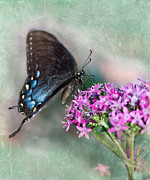 Pipevine Swallowtail Butterfly Prints - Life is Sweet Print by Betty LaRue