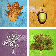 Acorn Digital Art - Life of an Oak Tree by Mary Ogle