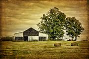 Life On The Farm Print by Cheryl Davis
