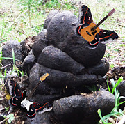 Lepidopterans - Life Rocks by Eric Kempson