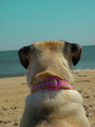 Tan Dog Prints - Lifes A Beach Print by Trish Tritz