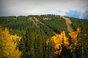 Santa Fe National Forest Photos - Lifts Above the Autumn Aspens by Aaron Burrows