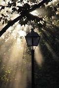 Amee Stadler - Light