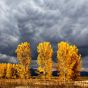 Landscape Trees Prints - Light And Darkness Print by Evgeni Dinev