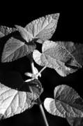 Jeannie Burleson - Light and Shadow