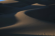 Sand Dunes Posters - Light and Shadows Poster by Timothy Johnson