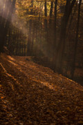 Autumn Scene Photos - Light breaking thru by Andrew Soundarajan