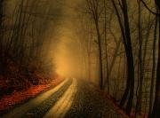Dirt Roads Photos - Light Breaks Through The Mist In Thomas by Miller Robert/National Geographic My Shot
