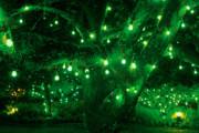 Gaspar Avila - Light bulb garden