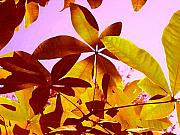 Library Digital Art - Light Coming Through Tree Leaves 1 by Amy Vangsgard