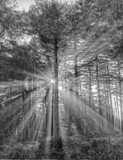 Light Print by Naman Imagery