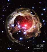 Round Shell Photo Prints - Light Echoes From Exploding Star Print by Space Telescope Science Institute / NASA