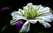 Fractalius Framed Prints - Light Green Zinnia Flower Framed Print by Darleen Stry