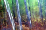 Abstract Impressionism Photo Prints - Light in the Forest Print by Bill Morgenstern