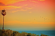 Flock Of Birds Posters - Light Of Sun Setting On  Malibu Beach Poster by Albert Valles