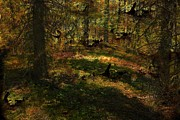 Forest Floor Digital Art Posters - Light On the Forest Floor Poster by Vickie Emms