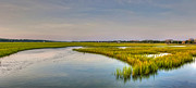 Pawleys Island Prints - Light on the Marsh Print by Ginny Horton