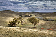 Paddocks Prints - Light on the Valley Print by Mark Richards
