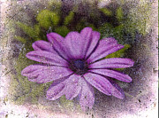Layered Prints - Light Purple Daisy Print by Susanne Van Hulst