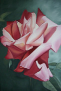 Flower Still Life Prints Framed Prints - Light Shadow Red Rose Flower Painting Framed Print by Sally Holt