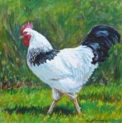 Cock Paintings - Light Sussex Rooster by Tomas OMaoldomhnaigh