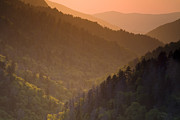 Great Smoky Mountains Posters - Light Through the Trees Poster by Andrew Soundarajan